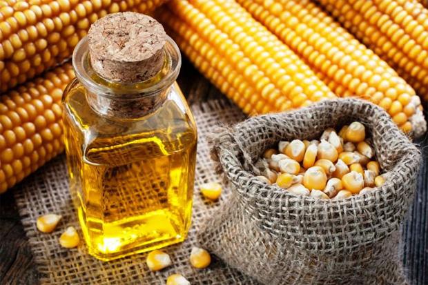 На фоне початков кукурузы мешочек с зернами и бутыль с кукурузным маслом