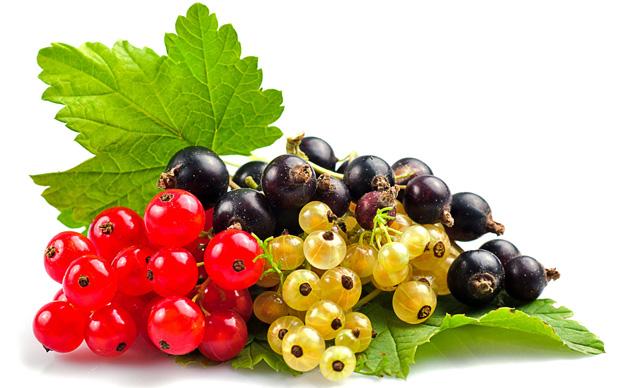Польза и вред смородины при диабете