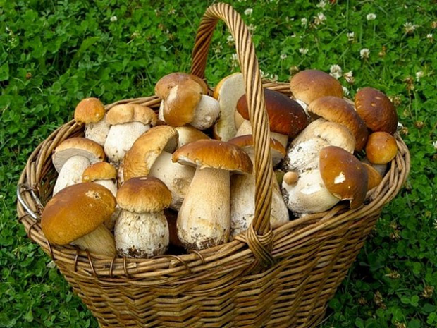 Правила употребления грибов при диабете
