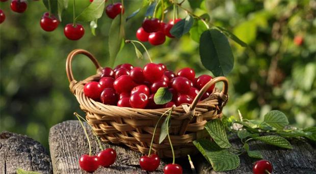 Полезные качества вишни при диабете